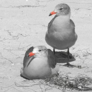 Birds_Olivia